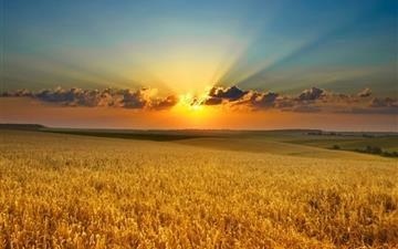 Golden summer field Mac wallpaper