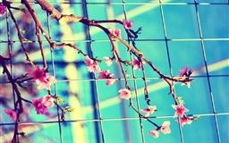Plants Flowers Branch Leaves Petals Mac wallpaper