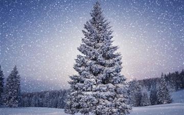 Fir-Trees Snowfall Winter Mac wallpaper