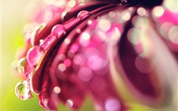 Bokeh Drops Flower Mac wallpaper