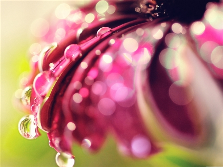Bokeh Drops Flower Mac Wallpaper