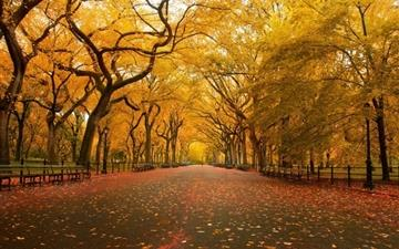 Yellow Trees Mac wallpaper