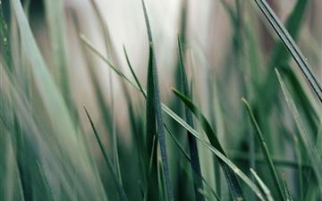 Green grass Mac wallpaper