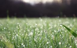 Grass macro water drop