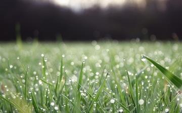 Grass macro water drop Mac wallpaper