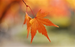 Orange Leaves Bokeh Mac wallpaper