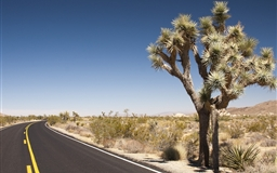 Joshua Tree Desert Road Mac wallpaper