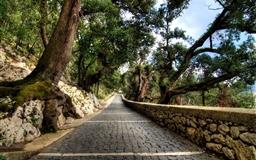 Cobblestone path Mac wallpaper