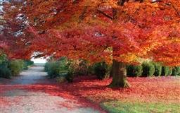 Autumn Leaf Mac wallpaper