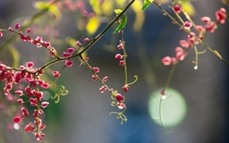 Twig Pink Flowers Mac wallpaper