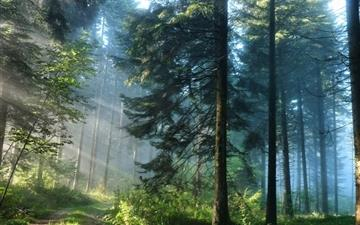The thick forest Mac wallpaper