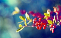 Red Berries Branch