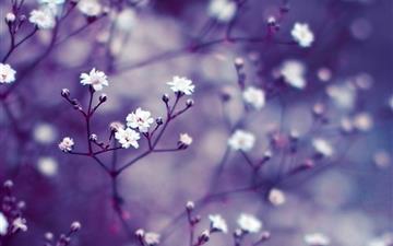 Nature Flowers Macro Mac wallpaper