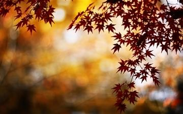 Red Foliage Bokeh Mac wallpaper
