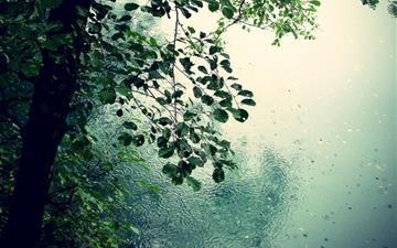 Nature Rain 2645 2 View Mac Wallpaper