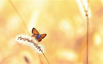 Butterfly Mac wallpaper