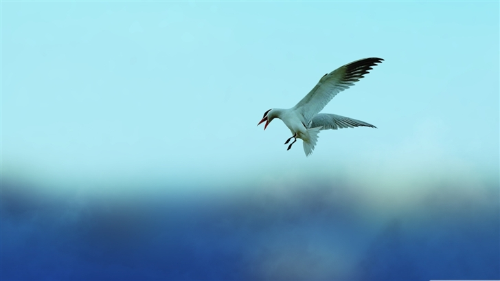 Seagull 5 Mac Wallpaper