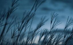 Grass dusk Mac wallpaper