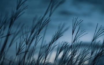 Grass dusk Mac wallpaper