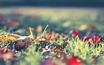 Fall Foliage 2 Mac wallpaper