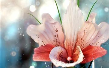 Flowers Cyan Water Droplets Fuzzy Mac wallpaper