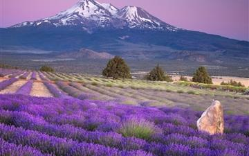 Mount shasta california Mac wallpaper