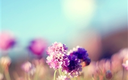 Flowers Field Nature Sunny Mac wallpaper