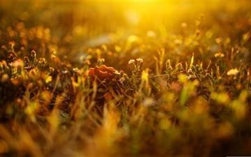 Sunlighted Grass Summer Mac wallpaper