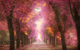 Pink park Mac wallpaper