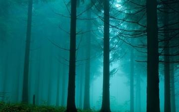 Forest In The Mist Nature Mac wallpaper