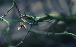 Tree Branch Bokeh Mac wallpaper
