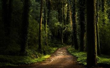 Forest fam Mac wallpaper