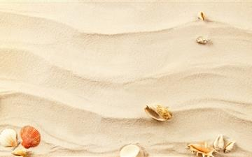 Shells on the sand Mac wallpaper
