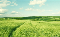 Bright Green Field Mac wallpaper