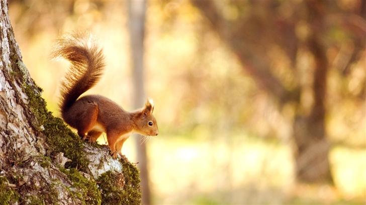 Cute Squirrel Mac Wallpaper