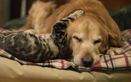 Cat&dog Mac wallpaper