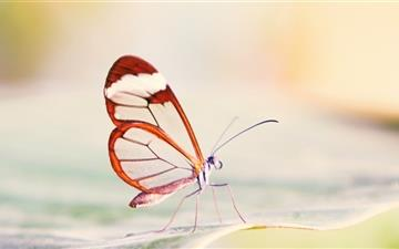 Transparent Wings Butterfly Mac wallpaper