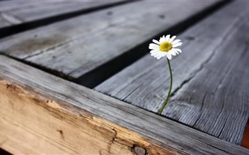 Wood and flower Mac wallpaper