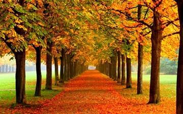 Dreamful autumn Mac wallpaper