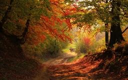 Beautiful autumn Mac wallpaper