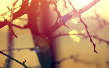 Winter Sunlight Lens Flare Mac wallpaper