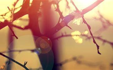 Winter Sunlight Lens Flare Mac wallpaper