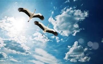 Storks Mac wallpaper