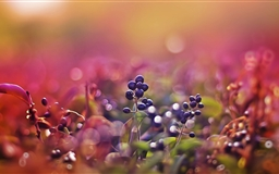 Black Fruits Bokeh