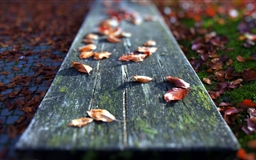 Leaves On The Bench Mac wallpaper