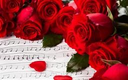 Rosa rugosa Mac wallpaper