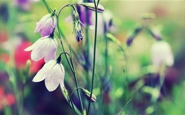 Purple Bells Flowers Mac wallpaper