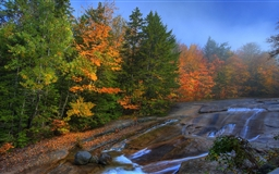 Streams in the forest Mac wallpaper