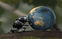 Dung beetle Mac wallpaper