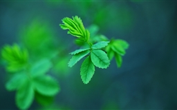 Green Spring Leaves Mac wallpaper